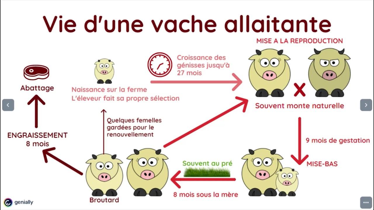 10 minutes pour découvrir... l'élevage bovin allaitant [vidéo]