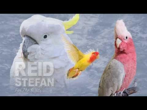 Reid Stefan - For The Birds (Audio) I Dim Mak Records