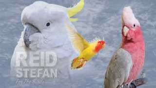 Reid Stefan - For The Birds (Audio) I Dim Mak Records