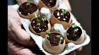 И почему я раньше так не делала? Как использовать коробки из под яиц в садоводстве?