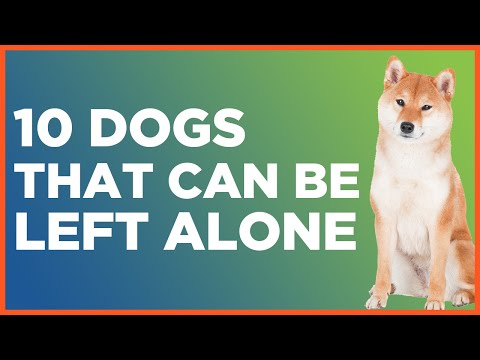 10-dogs-that-can-be-left-alone