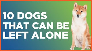 10 Dogs That Can Be Left Alone