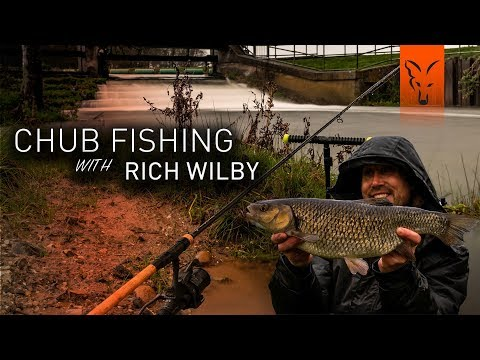 *** Chub Fishing With Rich Wilby ***