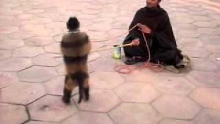 Monkey Talent and Song by Flute in Islamabad, Pakistan
