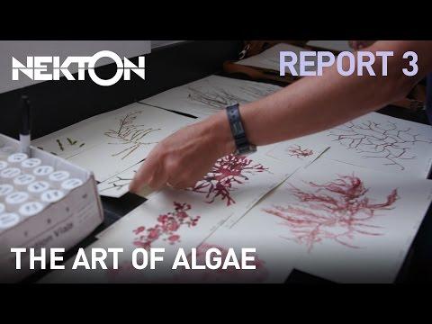The art of algae   Mission Report 3   Nekton Mission