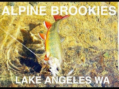 Lake Angeles alpine brook trout fishing.