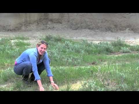 Big Muddy Badlands