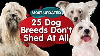 Top 25 Hypoallergic Dog Breeds: Minimizing Pet Allergies