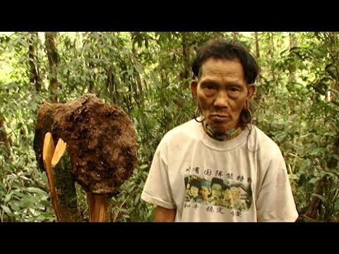 Complex Signs Used By The Penan To Communicate - Tribe With Bruce Parry - BBC