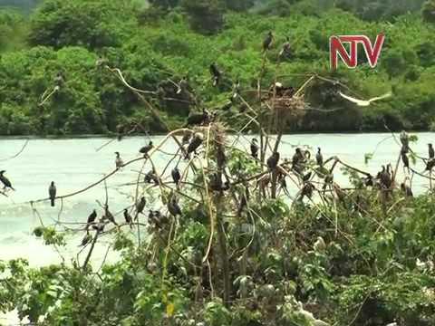 Eco Talk: Bujagali Water Reservoir