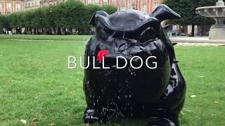 FREDERIC AVELLA; BULL DOG; DE MEDICIS GALLERY; PLACE DES VOSGES; PARIS