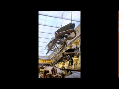 A trip to the Natural History Museum Dublin Feb 2017 (it's free!)