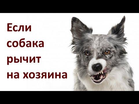 Если собака рычит на хозяина / If the dog Growls at Owner