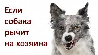 Если собака рычит на хозяина / If the dog Growls at Owner