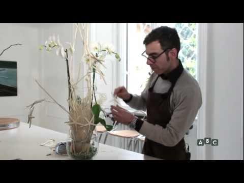 Abc un posto al fiore orchidea stellare youtube - Come curare un orchidea in casa ...