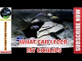 African Cichlid Food | History Of What I Have Fed My Fish | Flake & Pellets