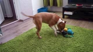 Собака собирает игрушки/ полезные трюки