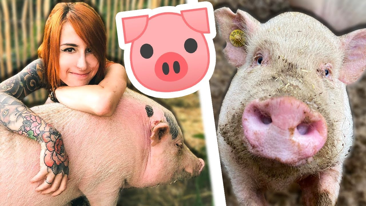 Download Minischwein als Haustier | DAS solltest du wissen! 🐷