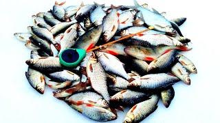 БЕЗМОТЫЛКА Первый лёд 2020 2021 Ловля плотвы на гвозде кубик Зимняя рыбалка