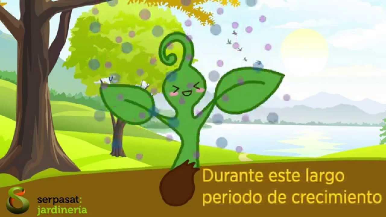 El cuidado de las plantas youtube - Que cuidados necesita la flor de pascua ...
