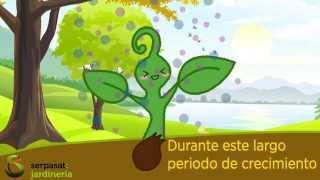 El Cuidado De Las Plantas