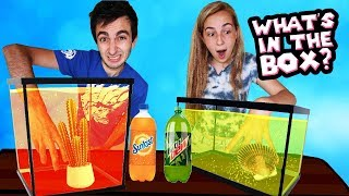 WHAT'S IN THE BOX CHALLENGE - Soda Edition! (Mountain Dew vs Sunkist)