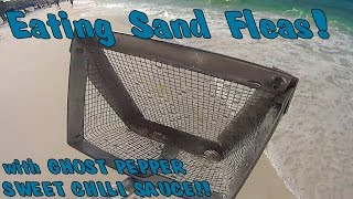 eating sand fleas w ghost pepper chili sauce recipe and catch