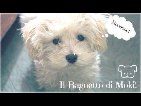 Il primo bagno per educare il cucciolo funnydog tv - Come fare il bagno al cane ...
