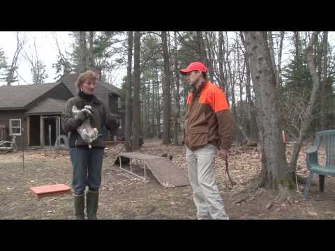 The Versatile Hunting Dog with Jason Carter Part 1