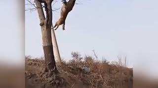 Собака летит, летающая собака