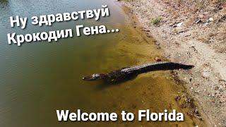 Встреча с Крокодилом Геной Почему нельзя отпускать собак и детей гулять без присмотра Флорида США