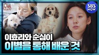 [TV 동물농장] 요약 '이효리와 순심이의 3647일간의 기록! 이별을 통해 깨달은 것들' / 'Animal Farm' Special   SBS NOW