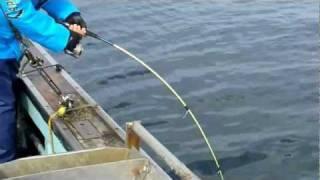 陸奥湾 真鯛釣り 野辺地沖 2011 10/16