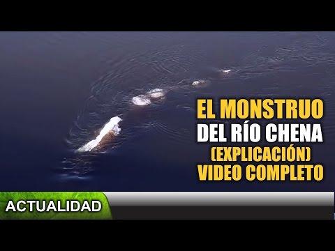 Video completo El monstruo del Río Chena explicado Actualidad