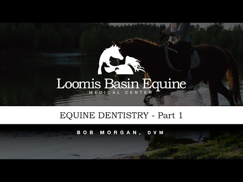 Equine Dentistry - Part 1