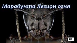 ФИЛЬМ УЖАСОВ Marabunta Legion of Fire Killer Ants!