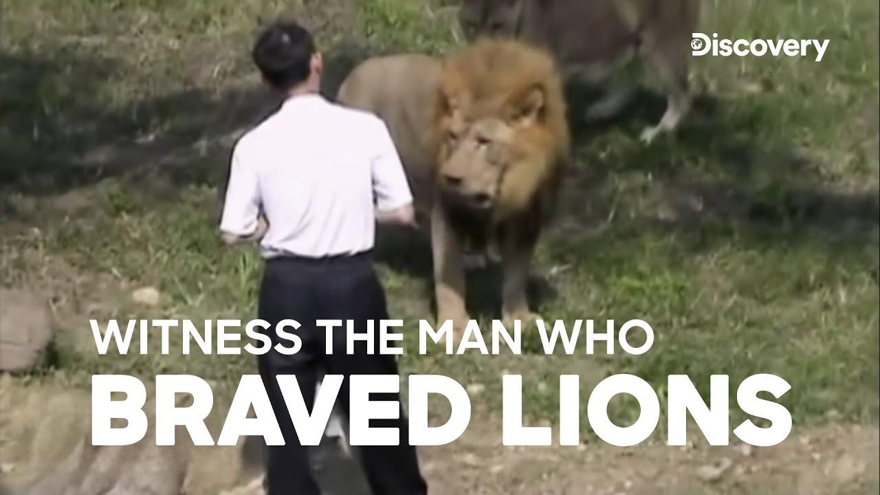 Download Lion attacks man