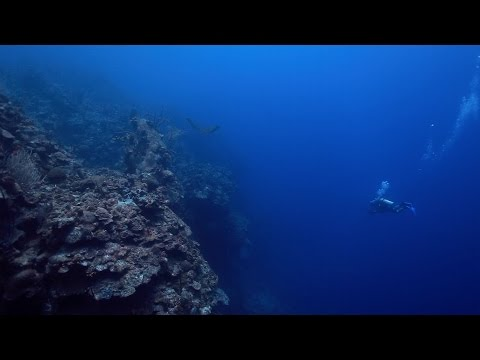Eagle Ray Pass, Diving the Drop Off - Grand Cayman