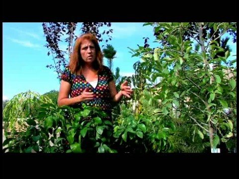 Growing & Caring for Trees : How to Grow Orange Trees