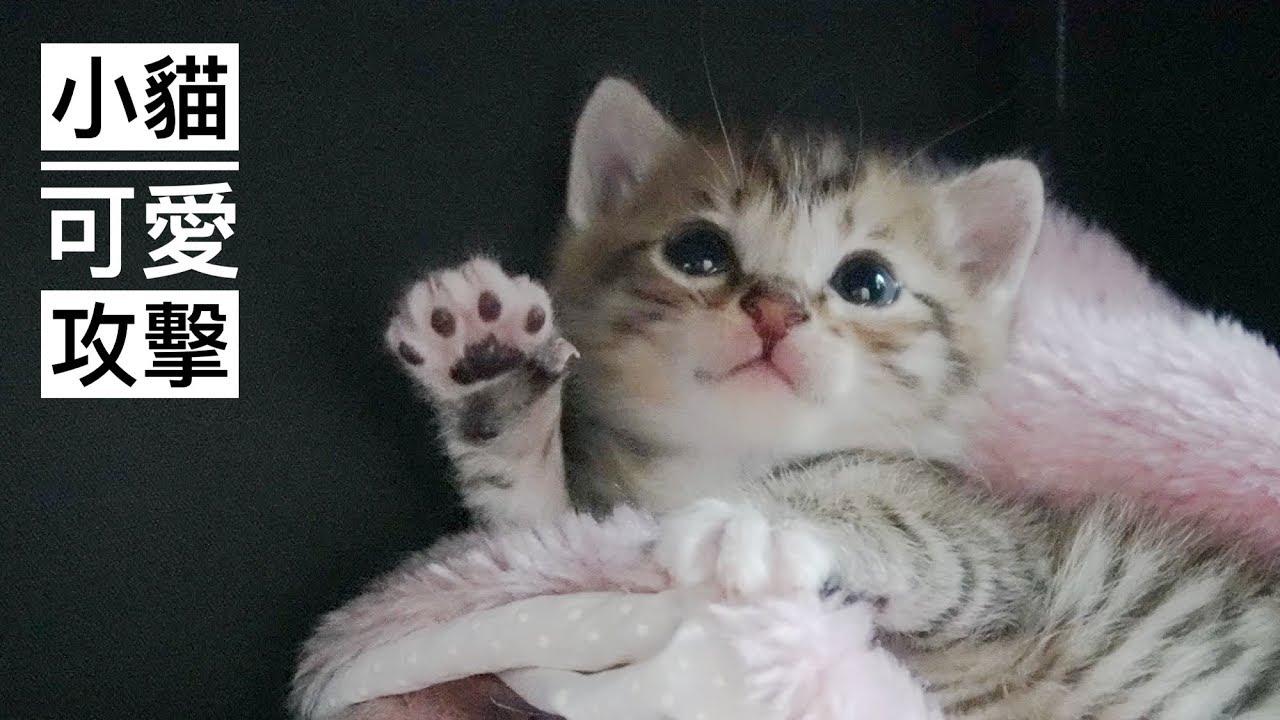 家裡來了小奶貓!打完呵欠向你招手喔!丨麻糬貓奴貓咪日常 002 - YouTube
