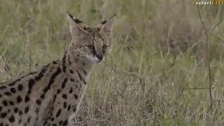 Pt 1 Safari Live's Sunset Safari Drive at 3:30 PM on Sept 13, 2017 ( Nkuhuma's & Hosana ) thumbnail