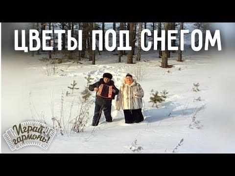 Играй, гармонь! | Анастасия Заволокина, Алексей Ходаковский | Цветы под снегом