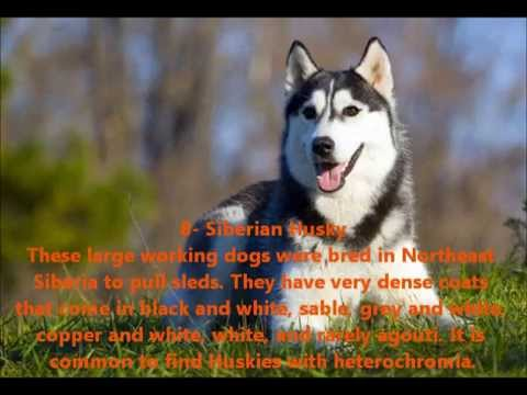 Top 10 Coolest Looking Dog Breeds - YouTube