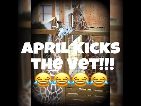 Thumbnail: April kicks Vet 3/6/17