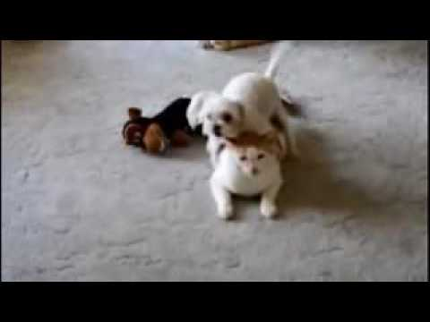 Funny Dog Vines Try Not To Laugh, Funny Dog Fails Try Not To Laugh Or Grin