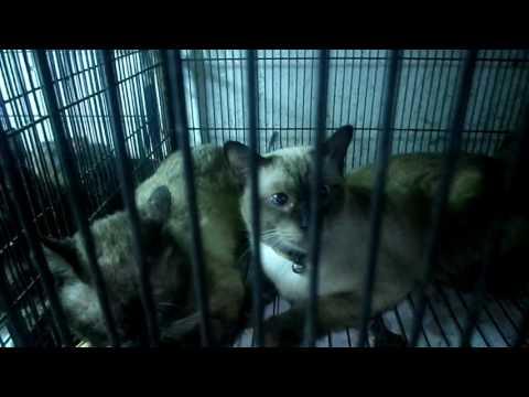 cats market in karachi   cats market pakistan   dogs market in pakistan   Birds and Animals