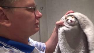Бездомный котенок.Жасмин