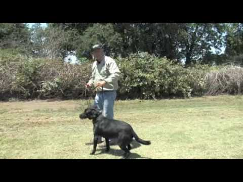 Garmin Dog Shock Collar Instructions