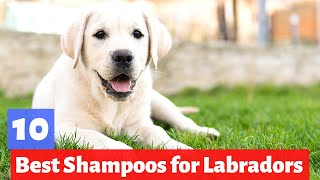 What are the Best Dog Shampoos For Labradors?