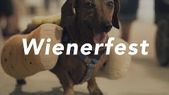 Wienerfest Tampa 2017 | Wiener Dog Derby | Canine Costume Contest and Dog Racing